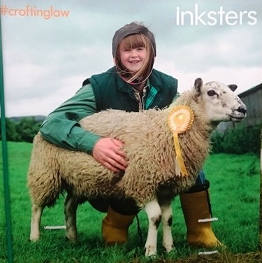 Caithness County Show - Inksters - Croting Law - Inky the Sheep
